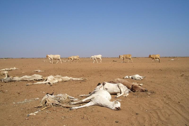 Conseguenze cambiamento climatico