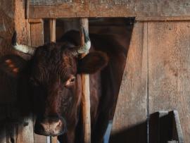 impatto ambientale carne