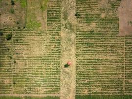 Impatto ambientale alimenti