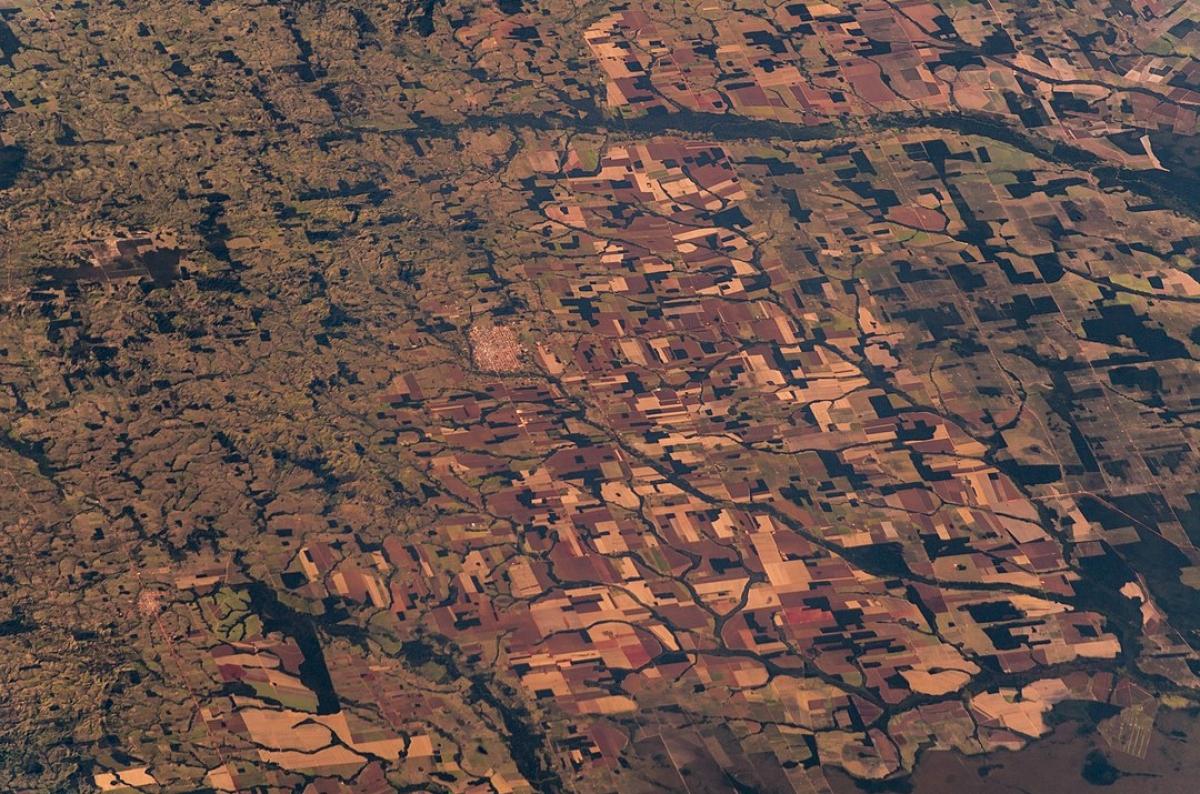 1080px-Amazon_rainforest_(Satellite_picture)